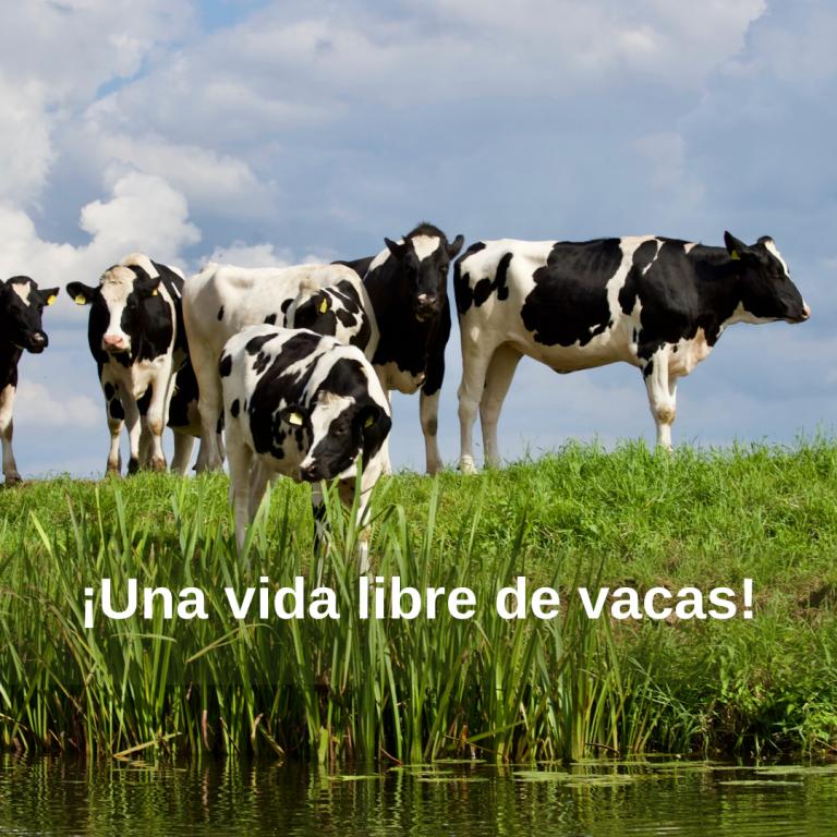 ¡Una vida libre de vacas!
